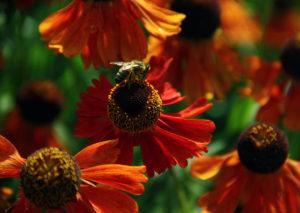 Mire jó a méhész tanfolyam?