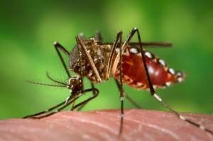 Szúnyoghálós redőny